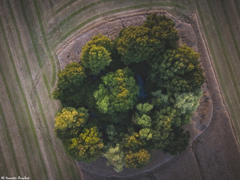 DJI_0060-forêt-champs-drone-6.jpg
