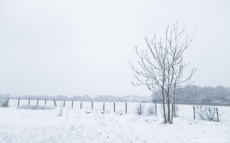 DSC08316-neige-hiver-2.jpg